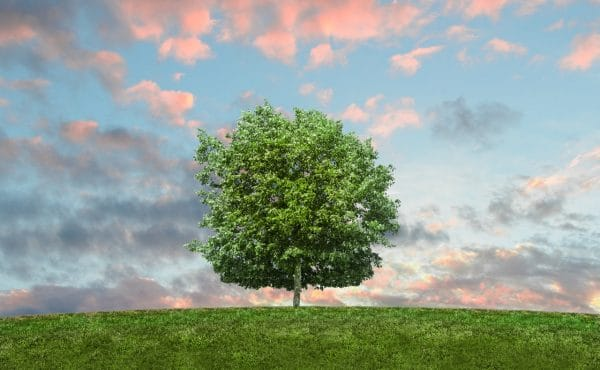 Large-Tree-benefits