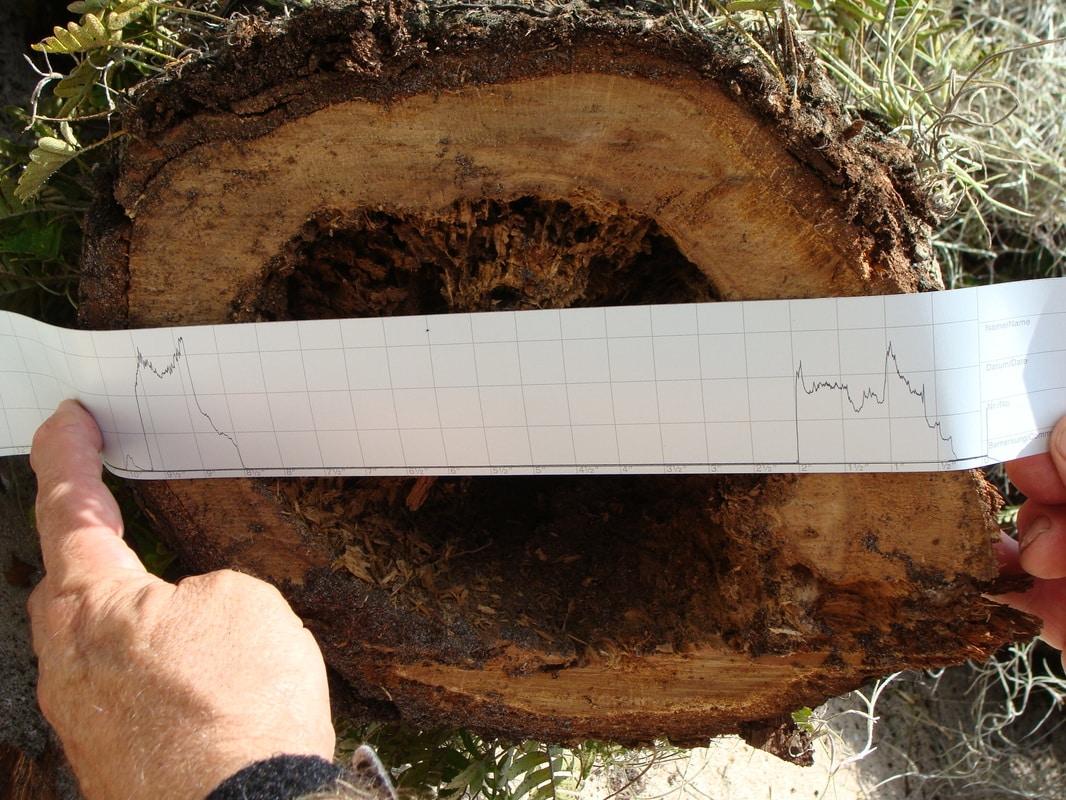 Tree-Diagnostics