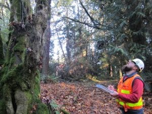 Arborist-examining-tree