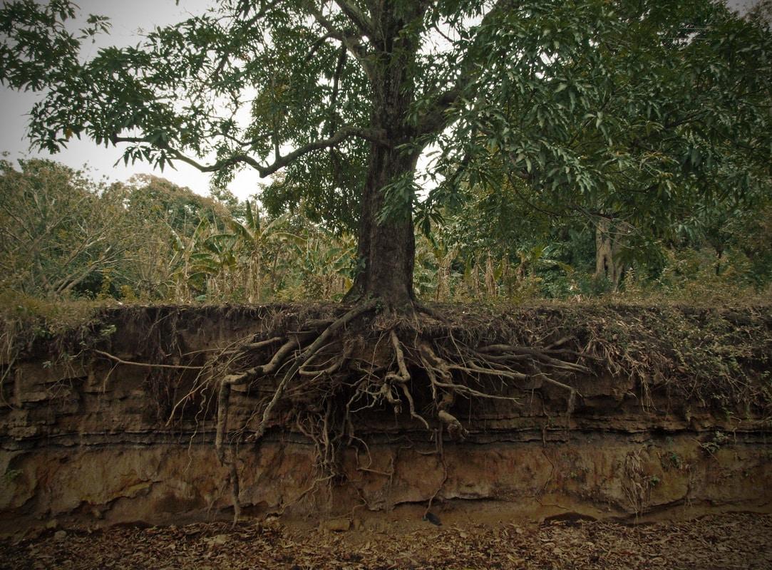 tree-health-plant-health-soil-interactions-with-mycorrhizae