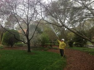 spraying-tree