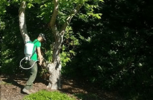 preventative-tree-care