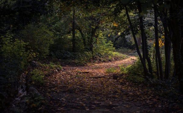 landscape-design-trail