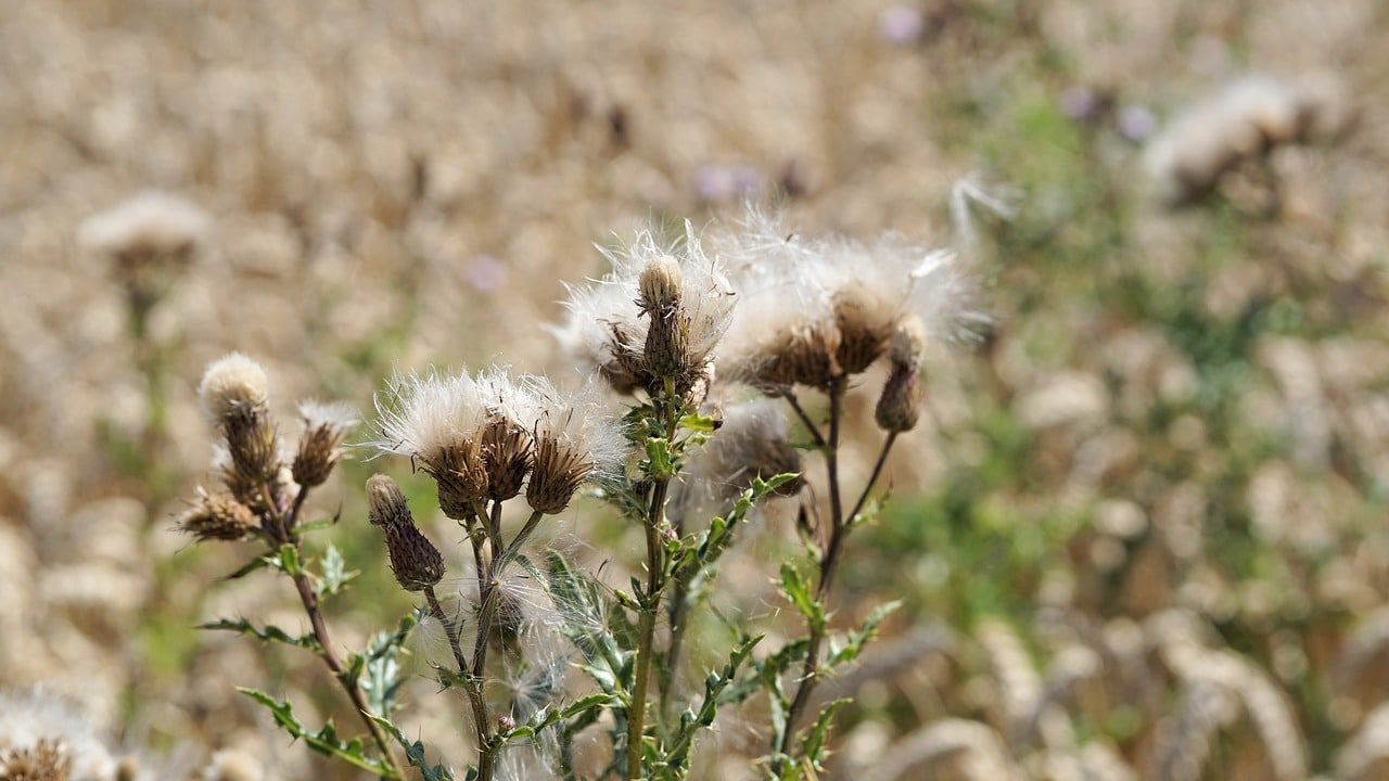 noxious-weed-control