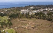 Freeman-park-restoration-Port-angeles