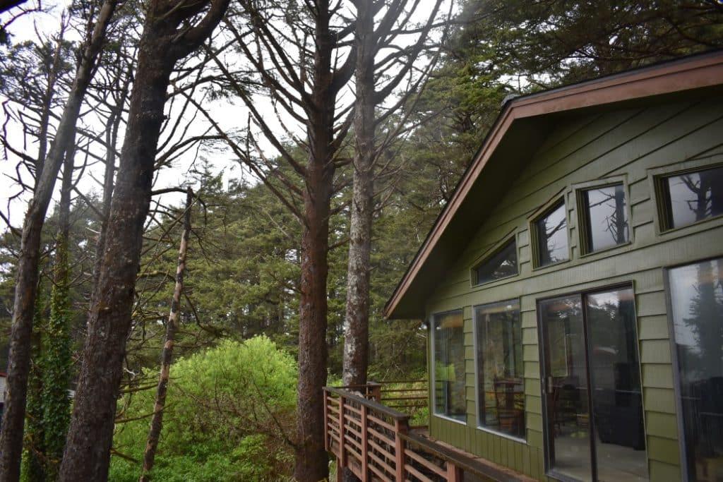 Arborist-evaluation-homeowners