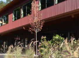 landscape-irrigate-plant-design