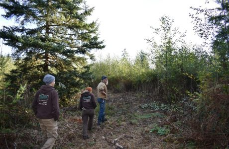 restoration_forest_conservation_lyre_creek