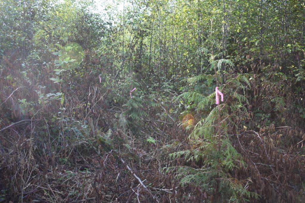 restoration_forest_conservation_lyre_creek
