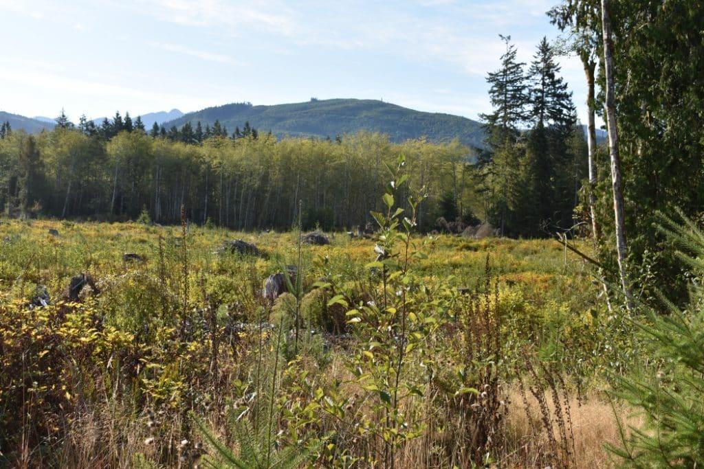 restoration_forest_conservation