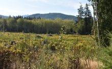 Forest restoration for public land