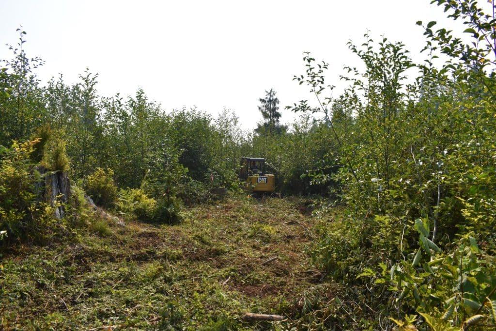 restoration_forest_public_trails