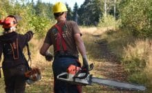 Forest restoration for public land, Lyre Creek