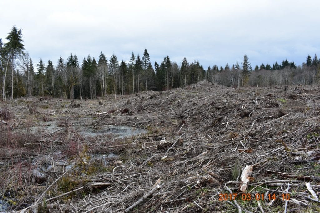 restoration-forestry-woodlands-Freeman-Port-Angeles-WA