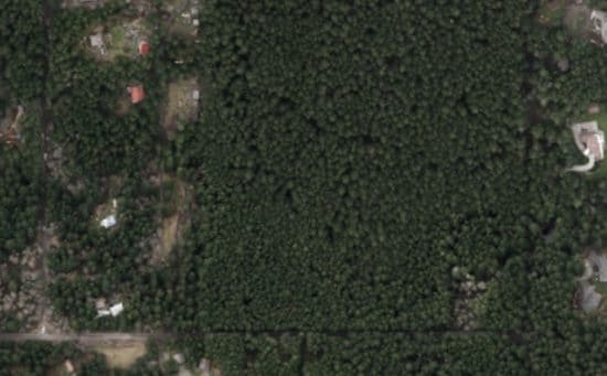 Large-scale-tree-conservation-plan