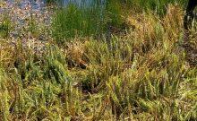 wetland-dungeness-farms-sequim
