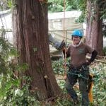 tree-pruning-English-ivy-removal