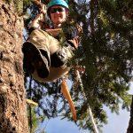 Tree-pruning-Douglas-fir