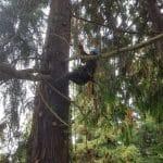 climbing_arborist_pruning
