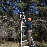 Arborist_pruning_fruit_trees