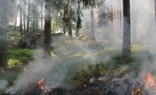 forest_fires_burning