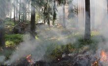 forest_fires_burning