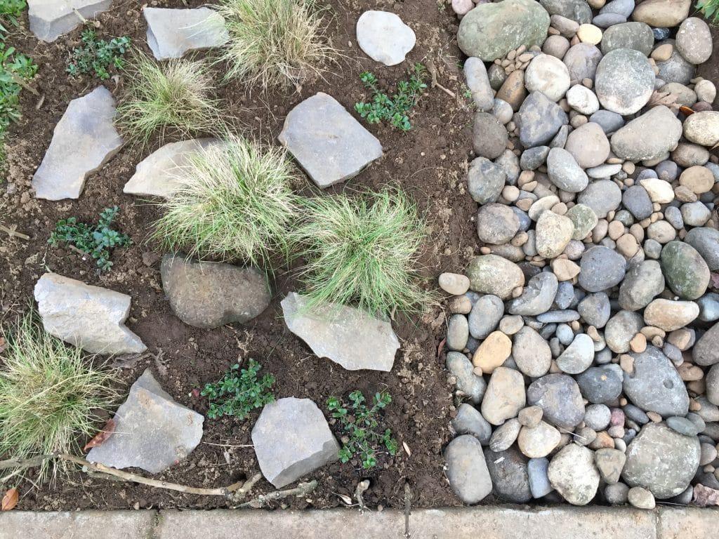 sustainable-landscaping-raingarden