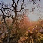 garry-oak-tree-pruning-sequim-washington