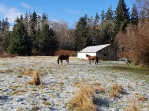 Horses in prairie in forestland evaluation in Jefferson county.