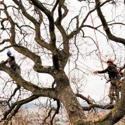 tree-risk-assess-3